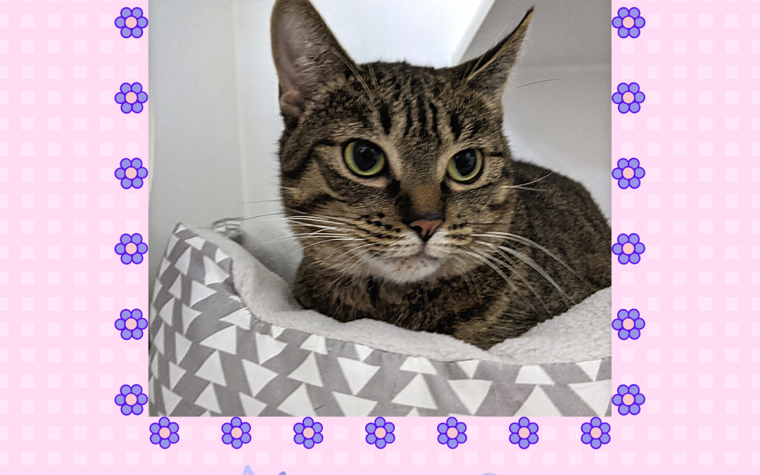 #ServiceSunday – Help Mrs. Buttons Find A Home