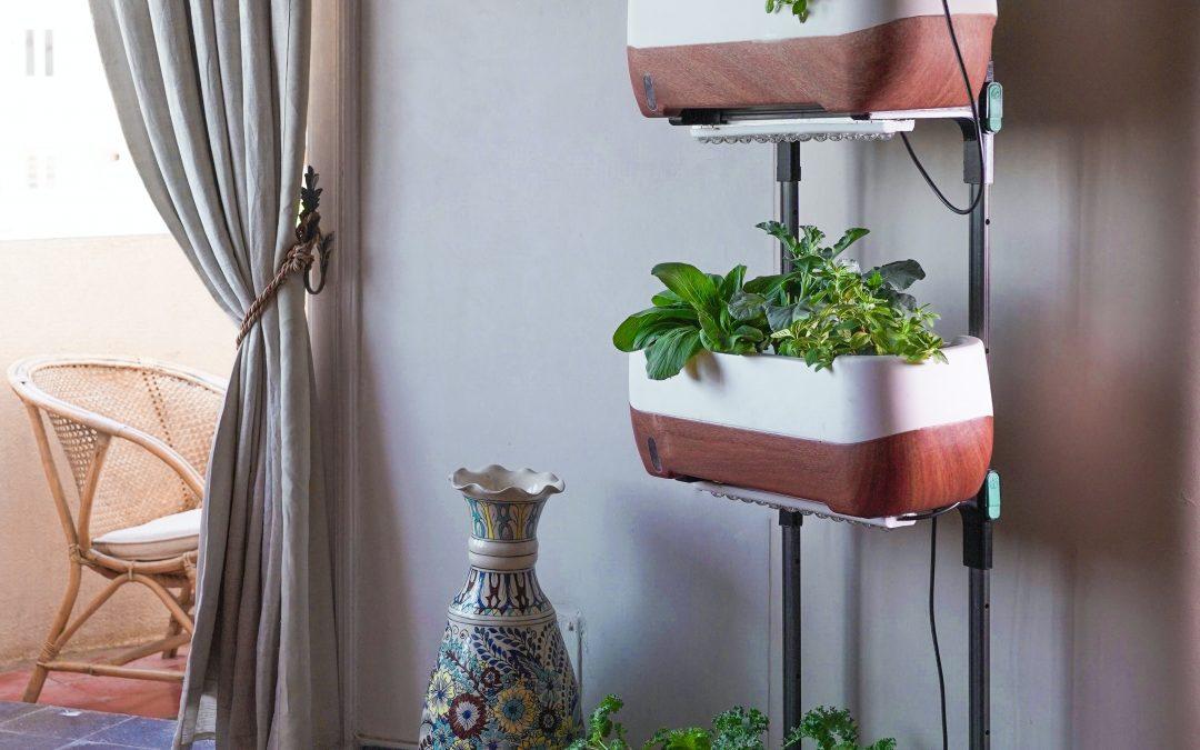 Indoor Gardening During the Winter Season